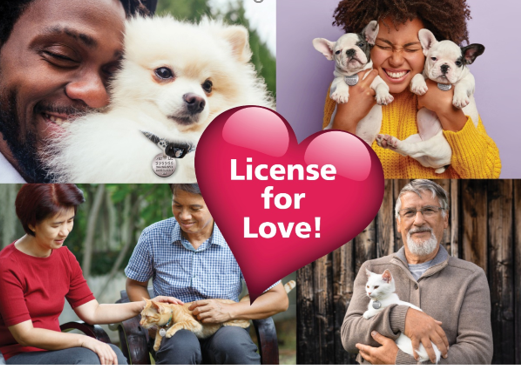 License for Love infographic