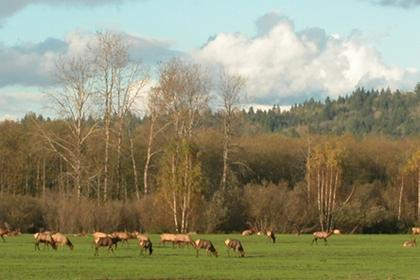 Elk on Meadowbrook Farm